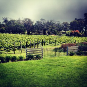 888 Fortune Enterprise Vineyard photo